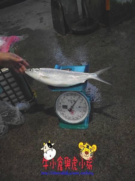 大溪漁港 (17).JPG