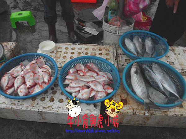 大溪漁港 (21).JPG