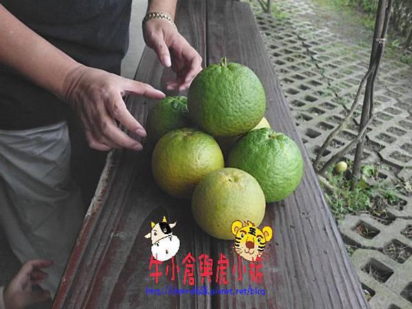 北關農場 (82).JPG
