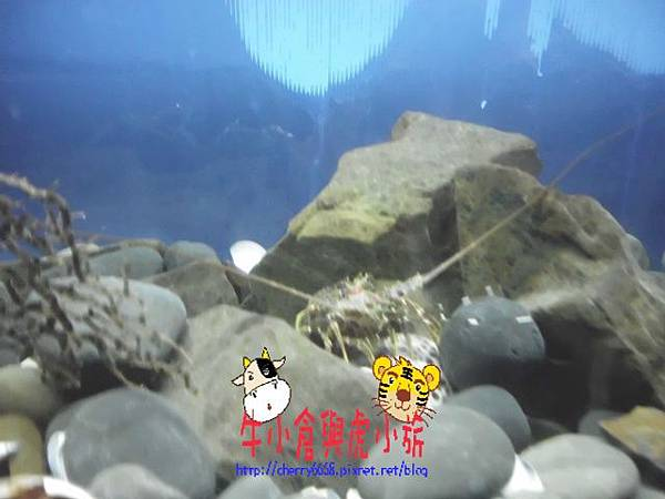 北關農場-生態區 (122).JPG