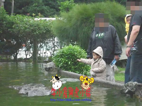 北關農場 (3).JPG