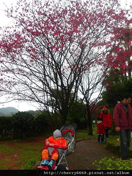02.11三峽白雞山 (7).JPG