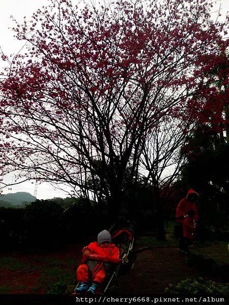02.11三峽白雞山 (8).JPG
