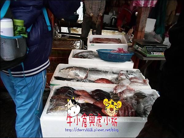 龜吼漁港 (9)