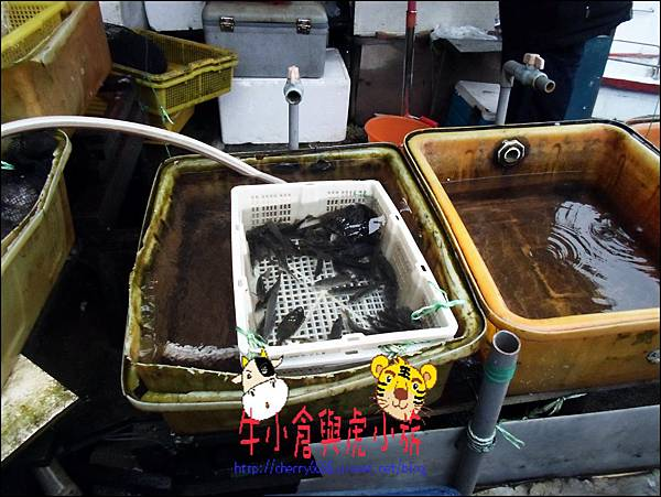 龜吼漁港 (11)