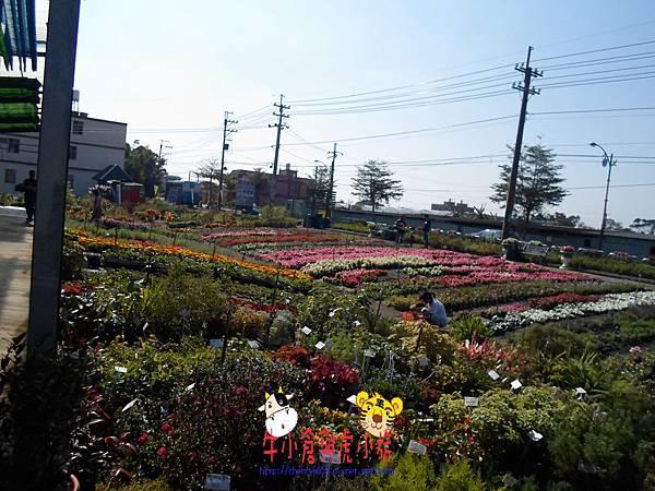 青松農場 (54).JPG