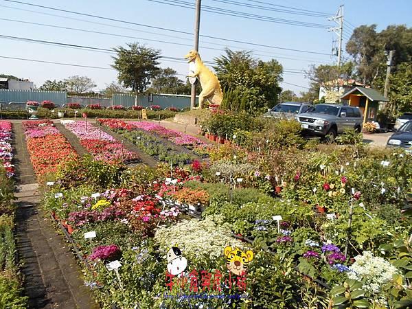 青松農場.JPG