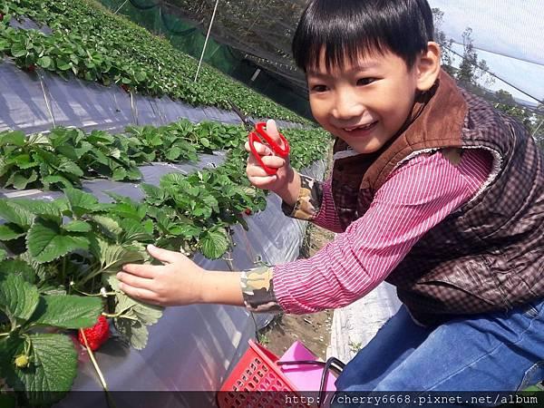 1224草莓園_161225_0006.jpg