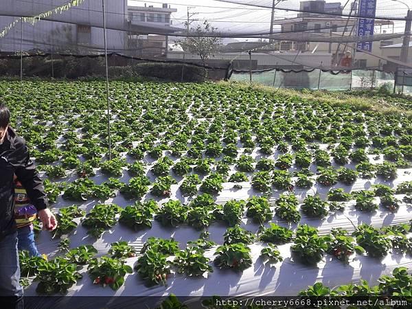 1224草莓園_161225_0004.jpg
