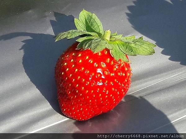 1224草莓園_161225_0007.jpg