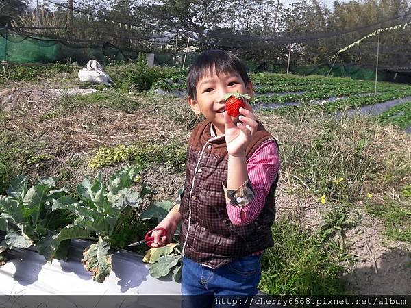 1224草莓園_161225_0002.jpg