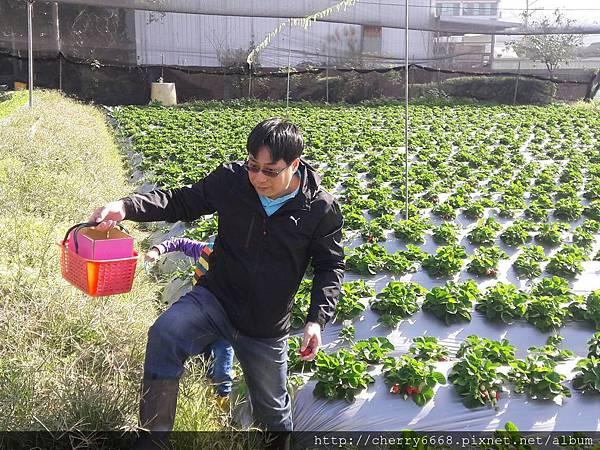 1224草莓園_161225_0003.jpg