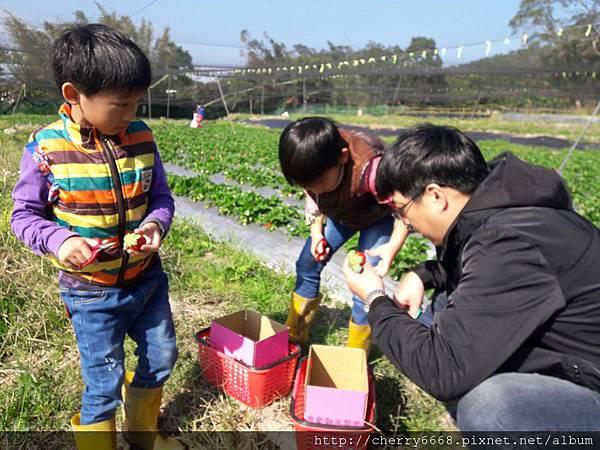 1224草莓園_161225_0009.jpg
