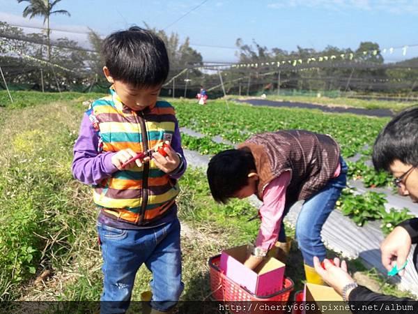 1224草莓園_161225_0010.jpg