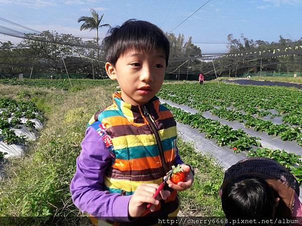 1224草莓園_161225_0014.jpg