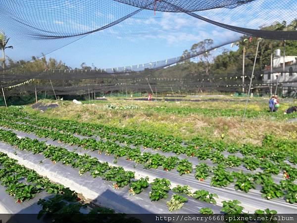 1224草莓園_161225_0016.jpg
