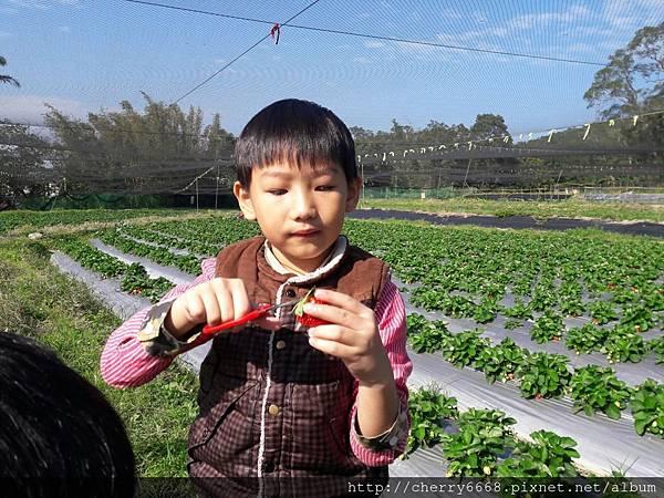 1224草莓園_161225_0015.jpg