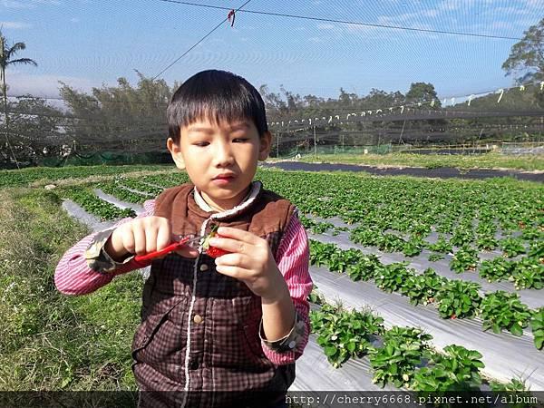 1224草莓園_161225_0017_0.jpg