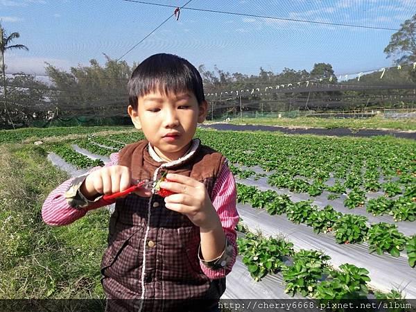 1224草莓園_161225_0017.jpg