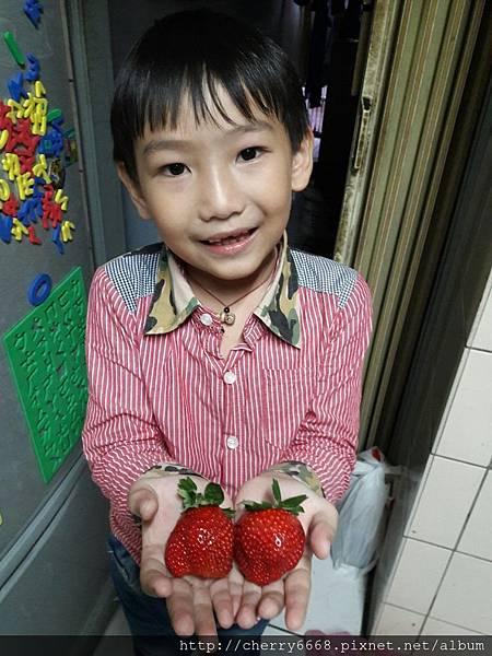 1224草莓園_161225_0026.jpg