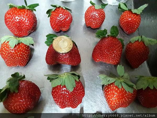1224草莓園_161225_0029.jpg