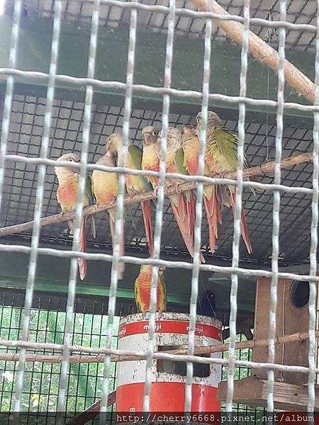20161224森林鳥_161225_0004.jpg