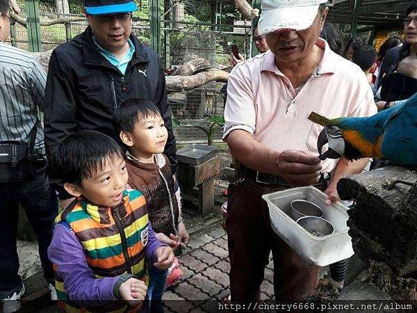 20161224森林鳥_161225_0174.jpg