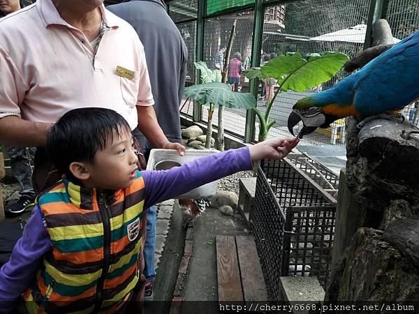 20161224森林鳥_161225_0168.jpg