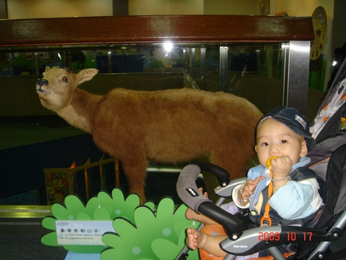 1017動物園 (36).JPG