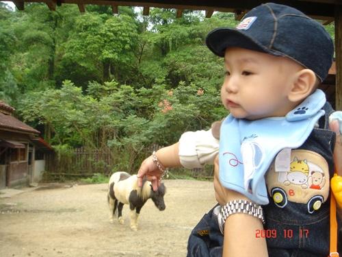 1017動物園 (40).JPG