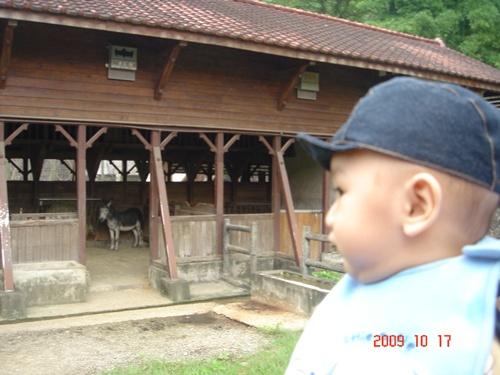 1017動物園 (44).JPG