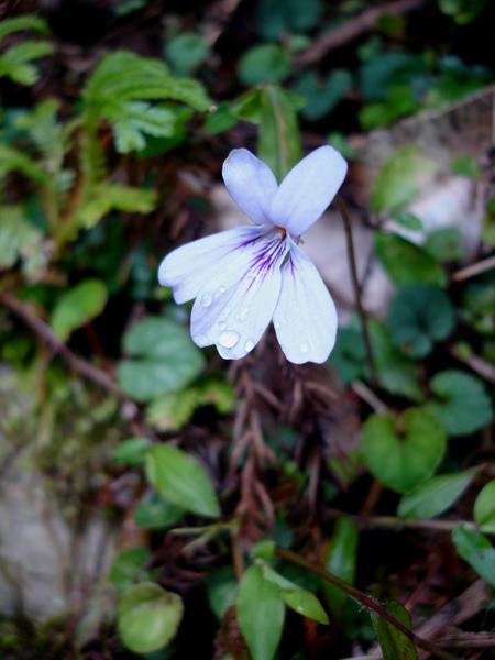 不知名的花.滿山遍野.JPG