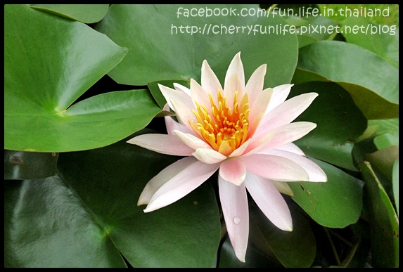 Sukhothai (69).JPG