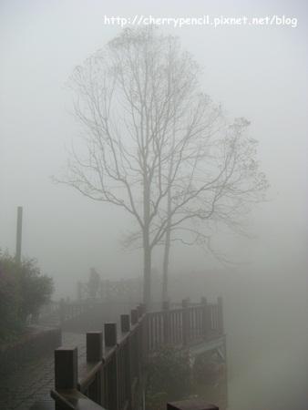 向天湖步道-1