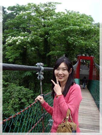 八卦力吊橋旁邊也有桐花唷^^