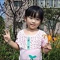 三芝摘柚趣-2.jpg