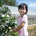 三芝摘柚趣-1.jpg