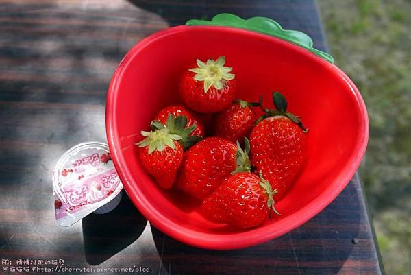 2016佐賀-牛島草莓園
