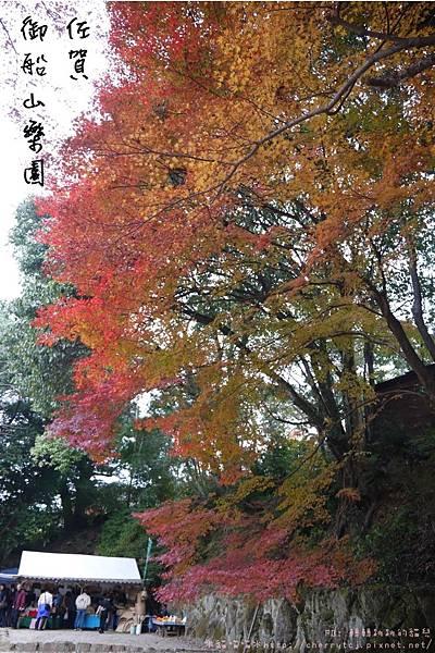 2014御船山賞楓
