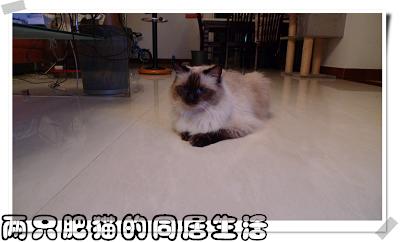 09年09月05日 (3).jpg
