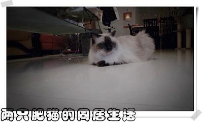 LX3攝 (2).jpg