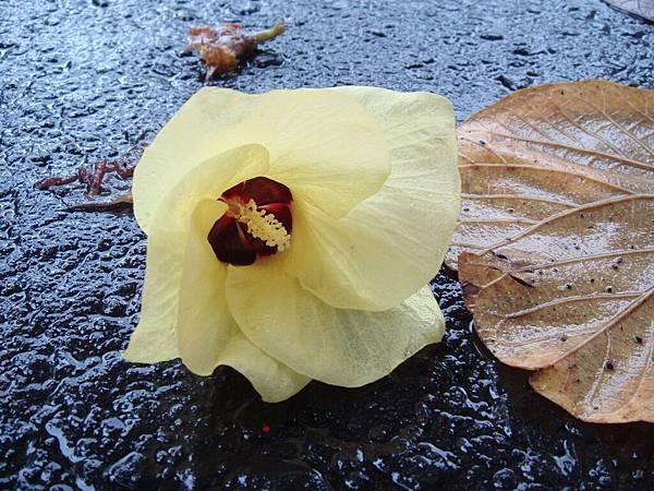 遇到一朵花