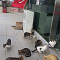 一進到特洛伊古城,就發現一大群貓讓我好開心啊,後來發現在回教國家貓無所不在喔。據說穆斯林愛貓源於貓愛乾淨的特性,我也愛貓!
