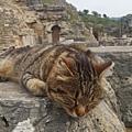"""只要細心觀察,無論古城的石柱上、石堆裡、圍牆邊...都可看見貓咪的蹤影。只能一直""""喀擦、喀擦"""",怎麼拍都拍不膩啊~~"""