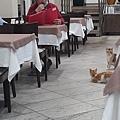 這家飯店的自助早餐選擇多、相當豪華也很美味,然後又看到喵星人了,牠們好像肚子也餓了...