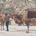 在這兒看到駱駝了,但是在回教國家要小心,不要太接近也不要亂摸、亂拍照,因為據說可能被飼主獅子大開口索費,或被抱上騎駱駝,付錢才能下來阿。