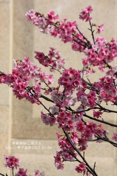 20130206【冬陽櫻花】 (1).JPG