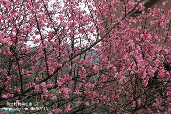2013-03-10【金瓜石】昀妹妹同遊 (25).JPG