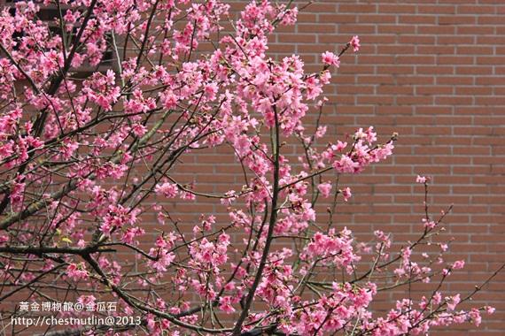 2013-03-10【金瓜石】昀妹妹同遊 (29).JPG