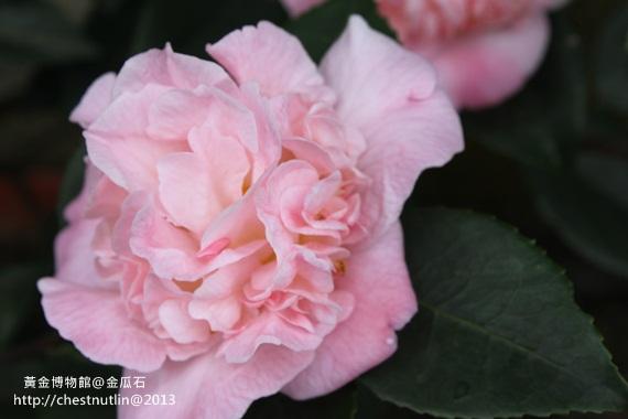 2013-03-10【金瓜石】昀妹妹同遊 (47).JPG